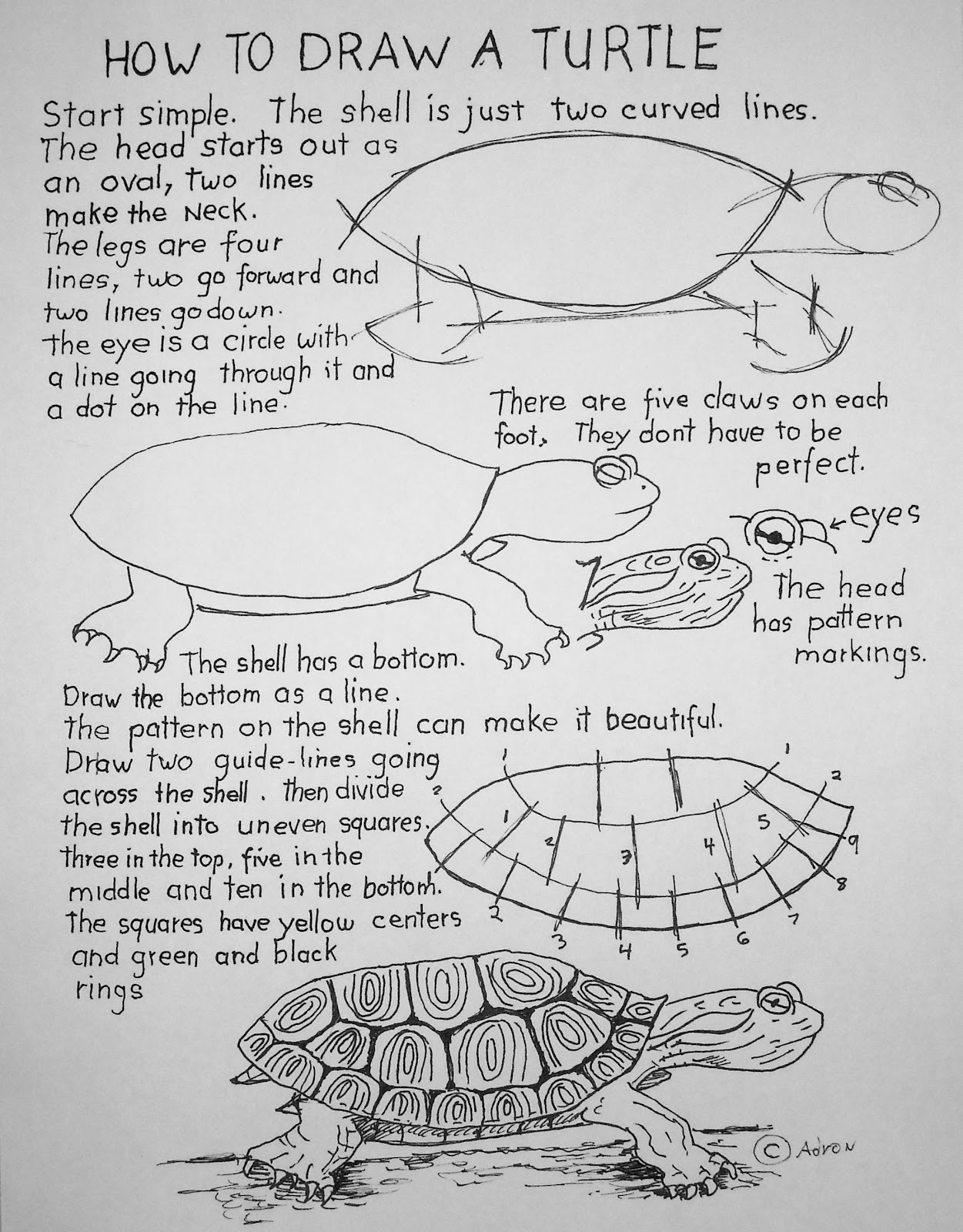 HOW TO DRAW A TURTULE