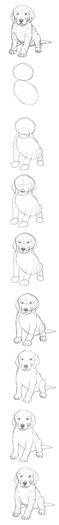 learn how draw a puppy