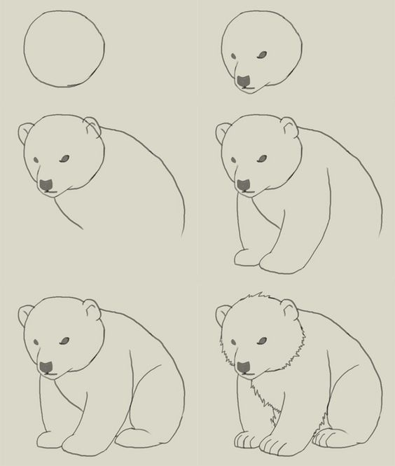 learn how to draw a polar bear