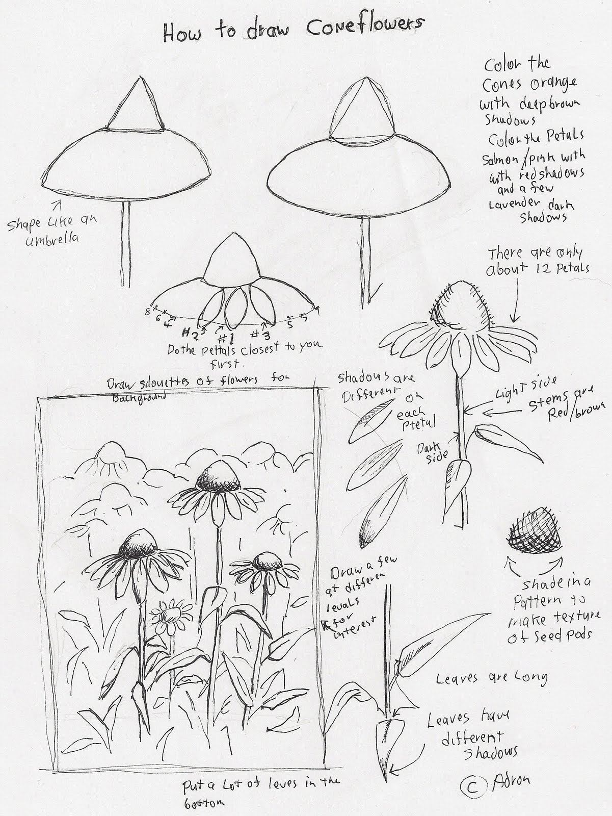 learn how to draw cone flowers