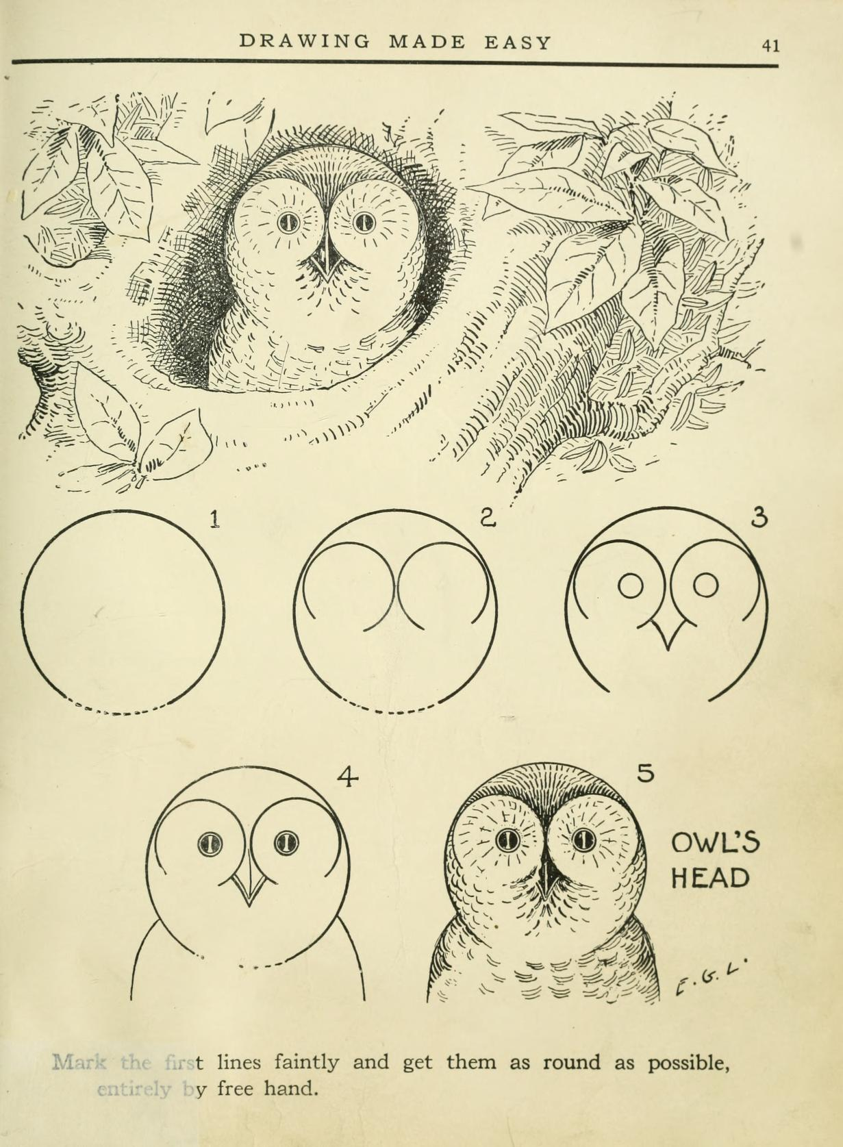 learn how to draw cool owls