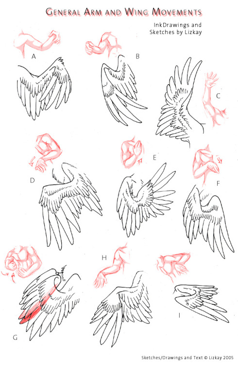 learn how to draw wings