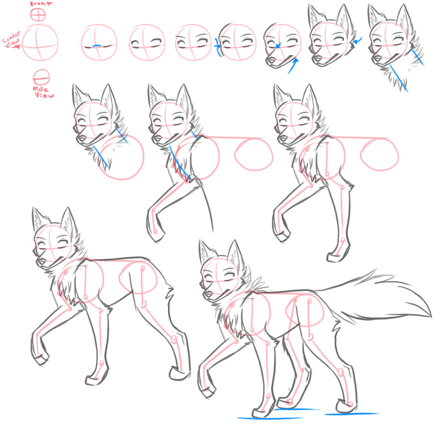 learn how to draw wolfes