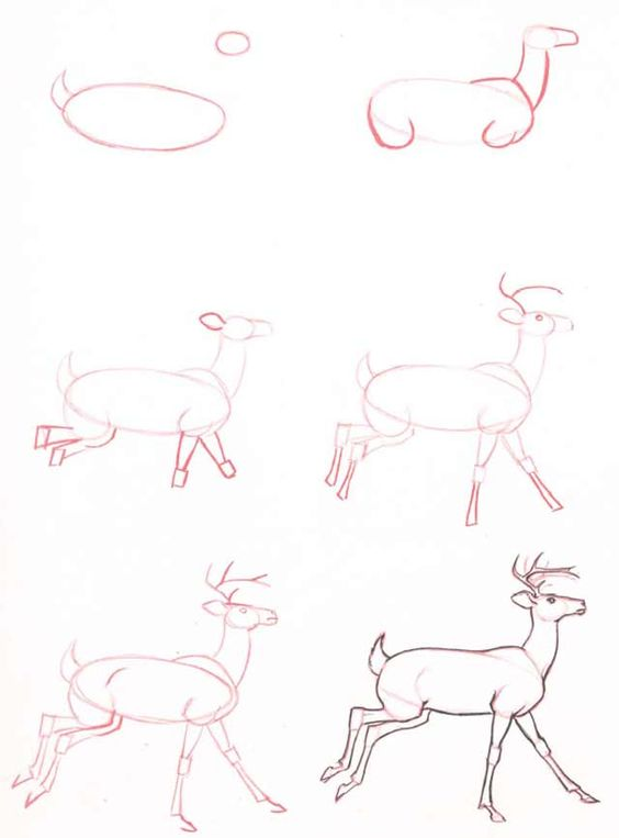 Learn How To Draw A Deer - 15 Easy Tutorials and Drawings - The ...
