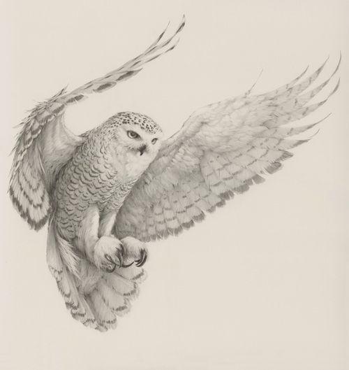 drawing14